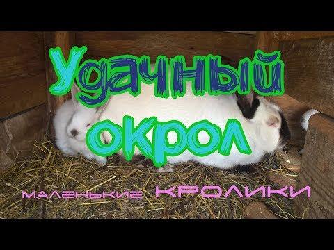 Удачный Окрол, много Кроликов. Как смотреть Гнездо Кролика | Дневник Кроликовода №22 | Арболитич