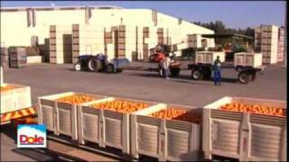 DOLE - Packing Pineapples