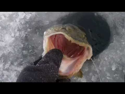 Ice fishing for Northern Pike on St. Lawrence River USA 2012.avi