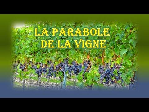La Parabole de la Vigne