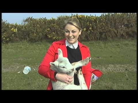 Reporter fail: Terrified journalist nearly drops sheep
