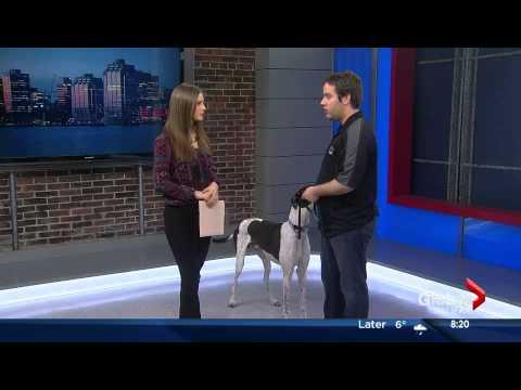 Dog Talk - Global Morning News Halifax March 26 with Tristan Flynn