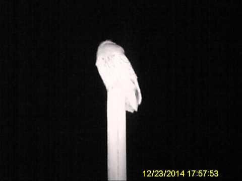 Ltl Acorn 5210A 940nm Wildlife Trail Camera - Tawny Owl