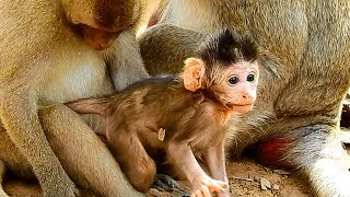 Congratulations! New Born Baby Monkey Janet Learn To Walk Strongly, Very Good
