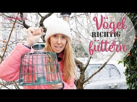 So füttere ich meine Gartenvögel im Winter - einfachKochen