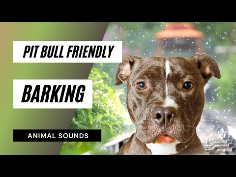 The Animal Sounds: Pit Bull Friendly Barking - Sound Effect - Animation