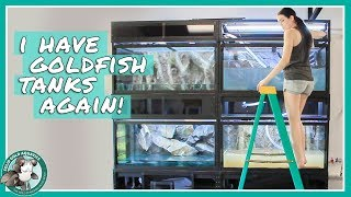 Setting Up My New Goldfish Tanks