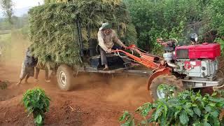 Xe công nông càng chở lúa quá tải  lên dốc mời các bạn cùng xem