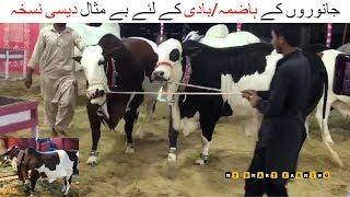 71 | Animal Digestion Desi Nuqsa  | جانوروں کے ہاضمہ/بادی کے لئے بے مثال دیسی نسخہ |