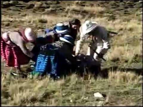 Conjunto Raices de Ccapacmarca-Ccarcoy-Q´ORILAZO PERÚ-CHUMBIVILCAS-Carnavales.