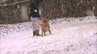 Augie's Snow Day Part 2 February 2015