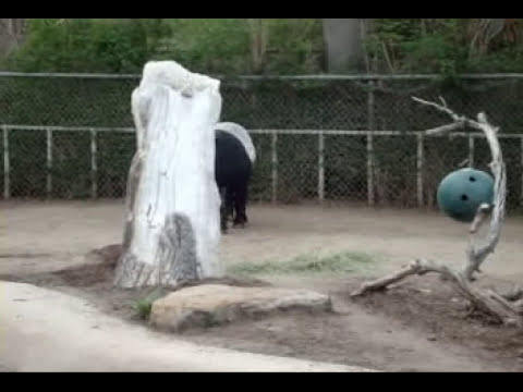 Hippo, Elephant, Tapir