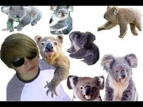 k is for kinky, k is for koala.