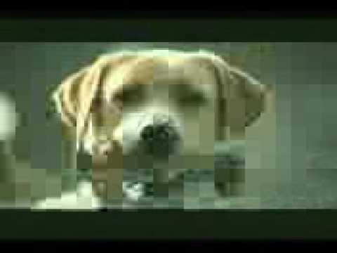 pobre perro