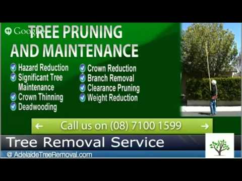 Tree Clearance Pruning Adelaide - Contact AdelaideTreeRemovalcom now at 08 7100-1599