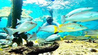 *AMAZING UNDERWATER FOOTAGE* Wreck Fish Catch Clean and Cook
