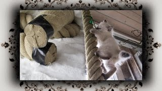 DIY 😻 Tauwerk Kletterseil aus Hanf für Kitten | hemp climbing rope for Kitty