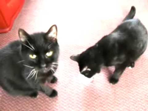 2 Old Black Pussy Cats video