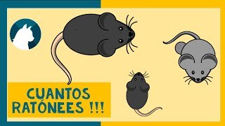 🐈Juego para gatos en video 🐾 - 🐭Juego de ratones🐭 - Games for cats - Jogo para Gatos