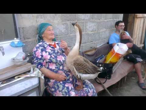 бабушка и ручной гусь (grandma and domestic goose)