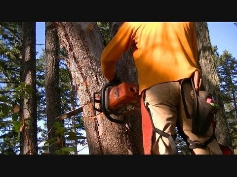 Felling Hung Up Trees *w/ near misses - Modified Stihl 039 / MS390 Full Wrap Handlebar