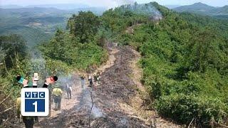 Lạ lùng trồng cây để ngăn cháy rừng
