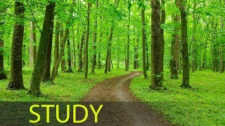 3 Hour Concentration Music: Study Music, Focus Music, Exam Music, Calming Music, Relaxation ☯1698