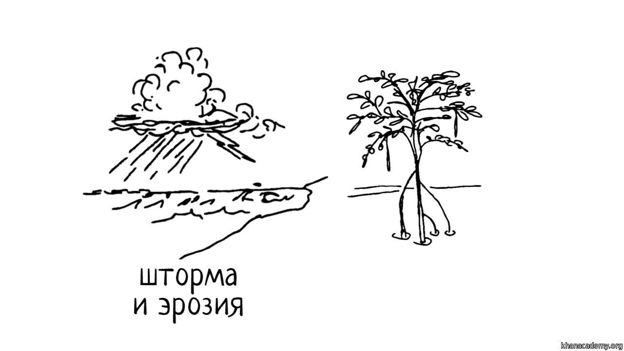 Ценность и значение биоразнообразия (часть 1) | Биоразнообразие
