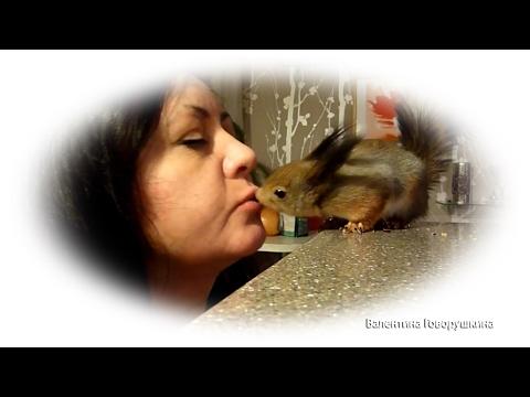 Baby squirrel Noble. Уроки поцелуя. :)) 手工蛋白質。10個月