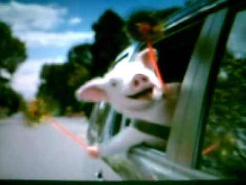 Funny Geico Pig Commercial!!!!!!! video