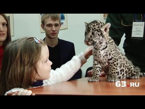 Детеныши ягуара: 3 кг «мимишности»