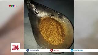 Thâm nhập công trường khai thác vàng trái phép | VTV24