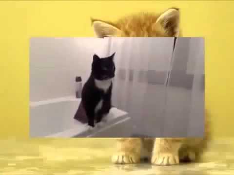 страхи кошек, Новые Приколы, Шутки, Смешные ролики Юмор! Прикол! Смех