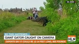 800-pound gator caught on camera