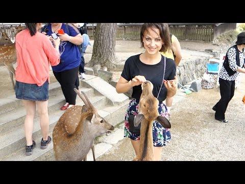 Assalita dai cervi di Nara! - Vlog Lunedì 8 Settembre 2014