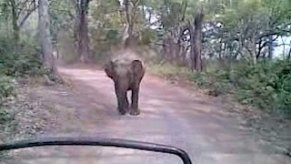 Wild Elephant Chases Tourist Jeep In India