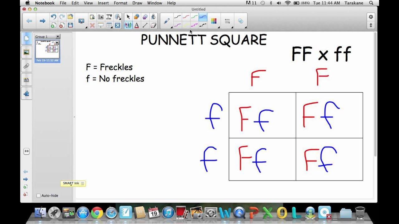 Printables Punnet Square Worksheet punnett square worksheets plustheapp worksheet jpg