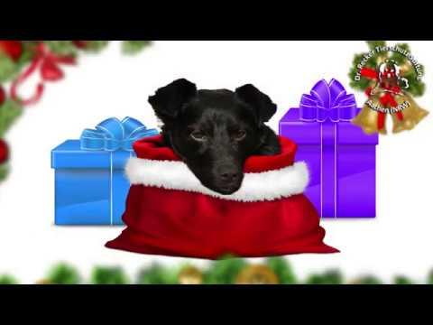 Bitte verschenken Sie keine Tiere zu  Weihnachten