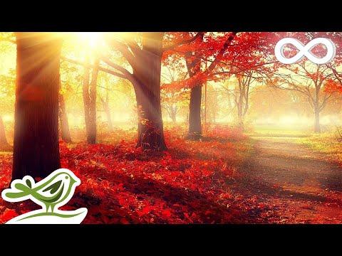Beautiful Romantic Music: Relaxing Music, Piano Music, Violin Music, Guitar Music, Cello Music ★101
