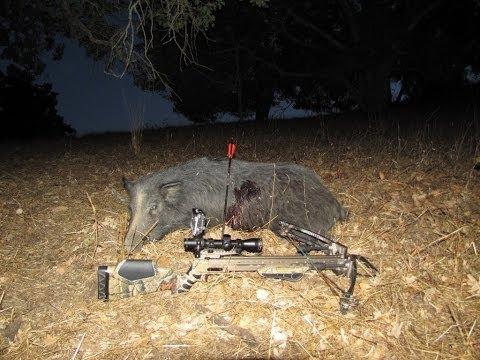 pig penetrates