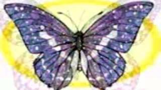 10 Magic butterflies mpeg4