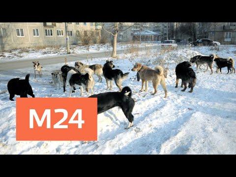 Загрызших человека собак могут выпустить на волю в том же районе - Москва 24