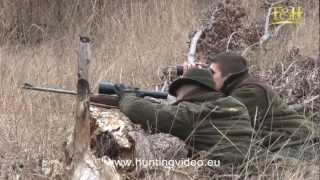 Wild Boar, Red Deer, Mouflon Hunting In Hungary Bükkszenterzsébet (HD).mpg