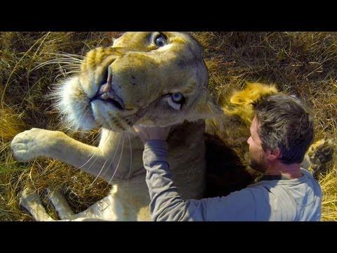 GoPro: Lion Hug