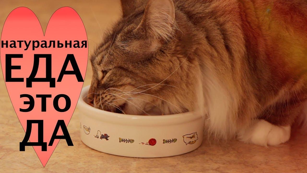 Питание для кошки в домашних условиях 352