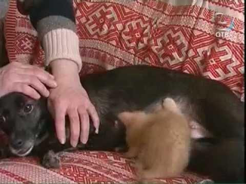 Дворняга стала для котят второй мамой