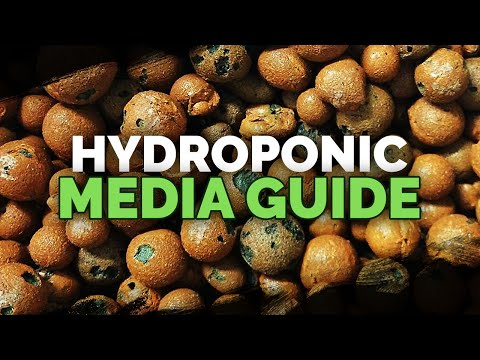 Hydroponic Media Guide  What Should You Use?