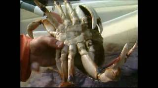 Oregon Dungeness Crab: From Sea to Plate
