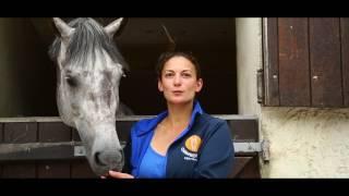 Chambergeot Equitation - Ecuries de proprietaire / Pension pour Chevaux / Ecole d'équitation