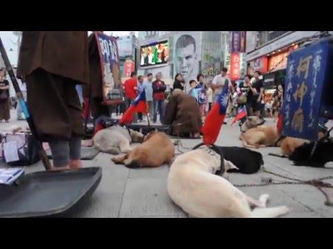柯神廟  雙十節牽著一群狗,狗背上插著國旗,跑到西門丁,還拿個大鐵錘,想要送國旗,柯神廟 他們的目的是什麼?
